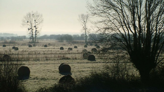 Aa winter frost on the marshes