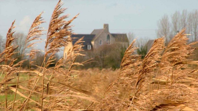 Reed beds 2