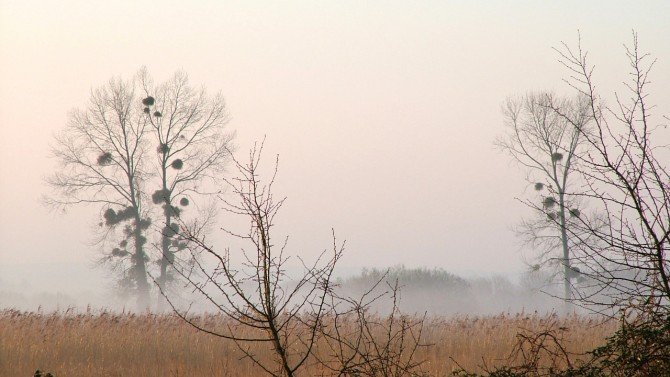 Aa early morning mist on the marshes