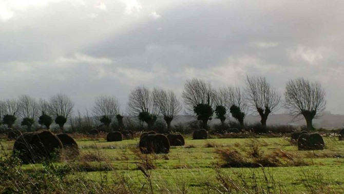 Winter on the marshes