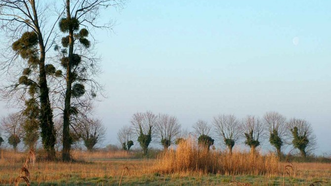 Winter sunshine over the marshes 7